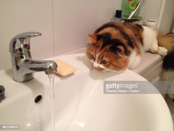 Close-Up Of Cat Looking At Running Water In Bathroom