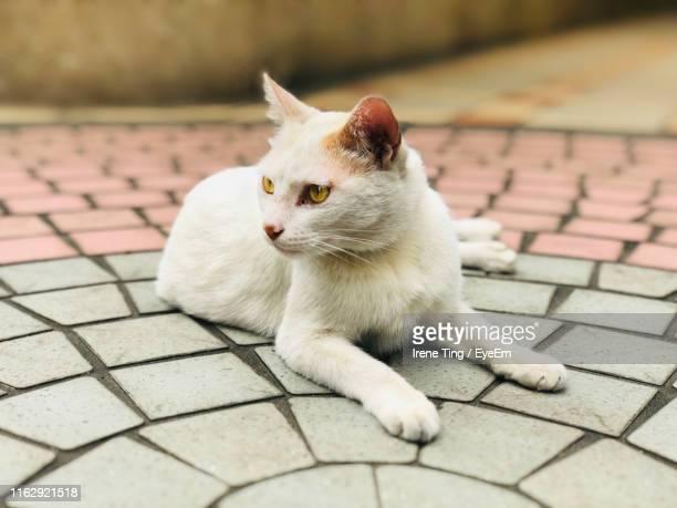 Close-Up Of Cat Looking Away On Footpath