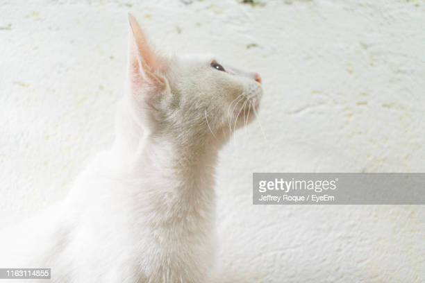 close-up of cat looking away - jeffrey roque stock photos and pictures