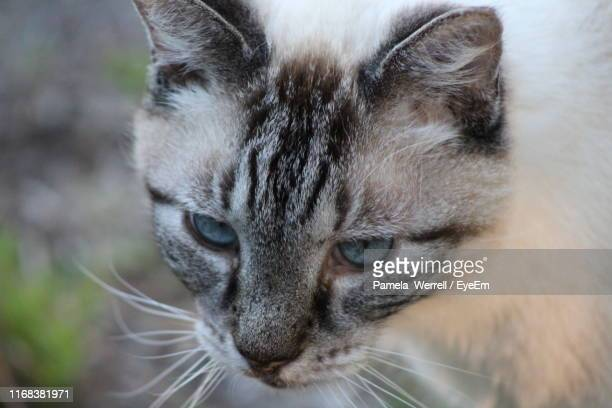 close-up of cat looking away - kissimmee stock pictures, royalty-free photos & images