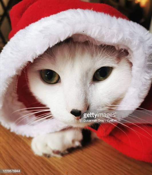 close-up of cat looking away - cat with red hat stock pictures, royalty-free photos & images