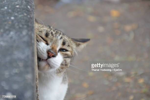 close-up of cat looking away - rubbing stock pictures, royalty-free photos & images