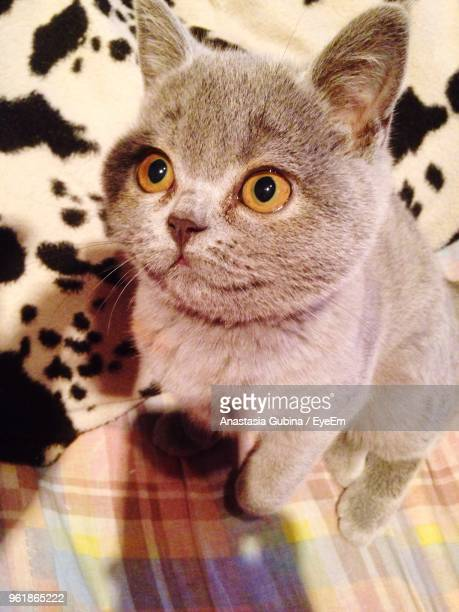 Close-Up Of Cat Looking Up On Bed