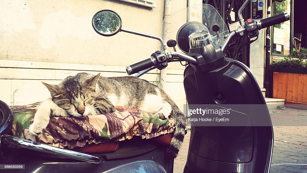 Close-Up Of Cat Lying Down On Scooter Parked At Street : Stock Photo