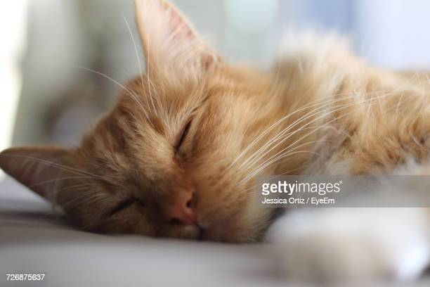 close-up of cat lying down - jessica ortiz stock pictures, royalty-free photos & images