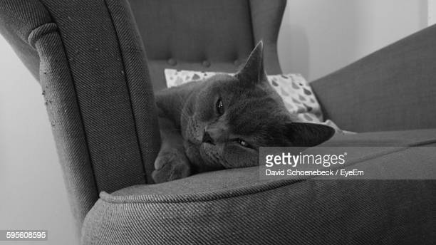 Close-Up Of Cat Lying On Armchair At Home