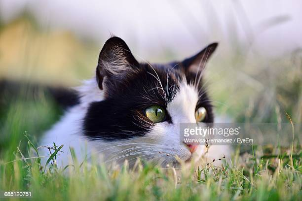 close-up of cat lying on grass at park - black cat stock photos and pictures
