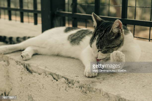 Close-Up Of Cat Lying On Retaining Wall