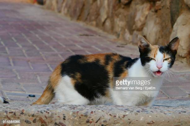 Close-Up Of Cat Meowing While Standing On Footpath