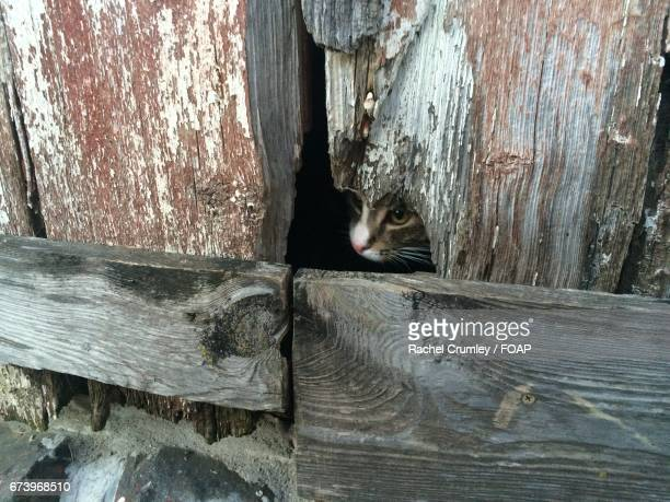 Close-up of cat near damaged wood