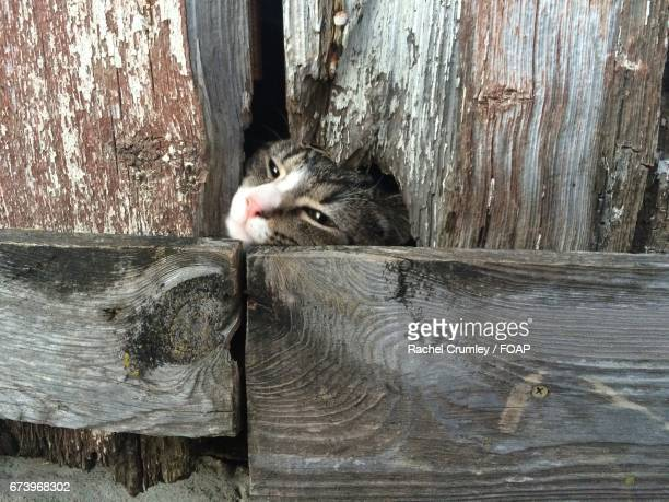 Close-up of cat near old wooden