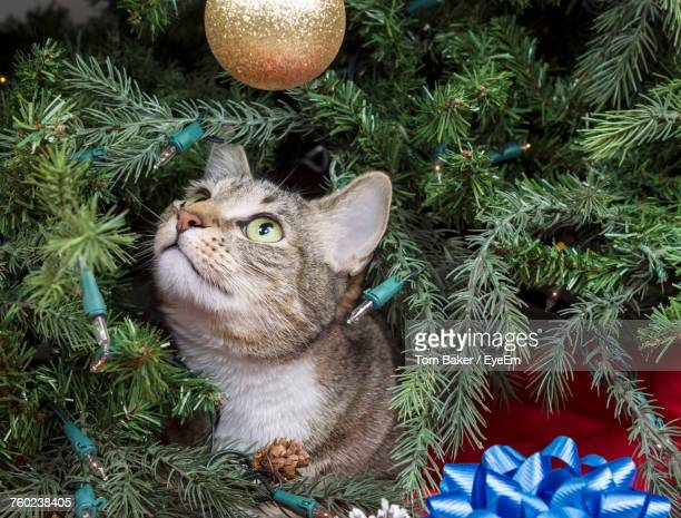 Close-Up Of Cat On Christmas Tree
