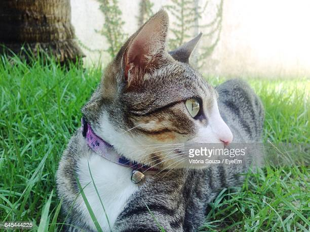 Close-Up Of Cat On Grassy Field