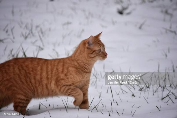 Close-Up Of Cat On Snow