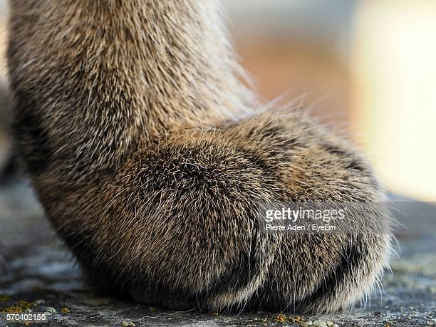 Close-Up Of Cat Paw On Floor