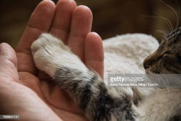 close-up of cat paw on hand - feline stock pictures, royalty-free photos & images
