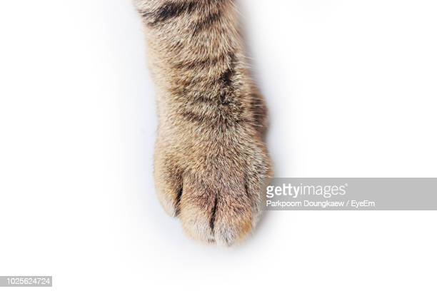 close-up of cat paw over white background - gato fotografías e imágenes de stock