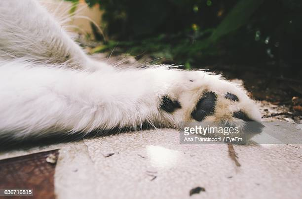 Close-Up Of Cat Paw
