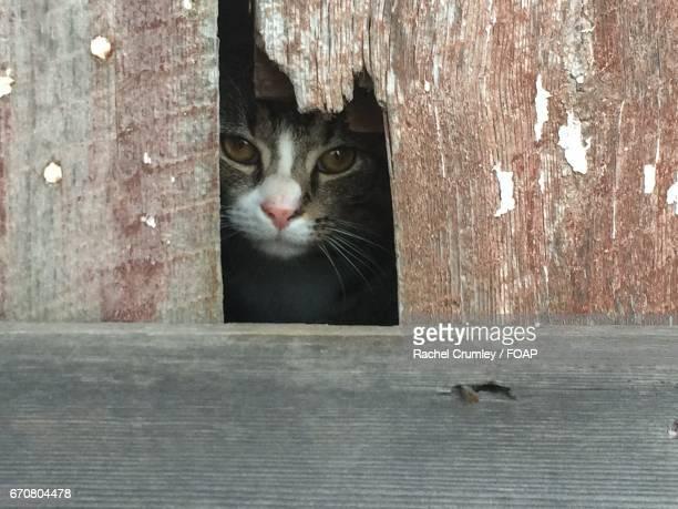 Close-up of cat peeking