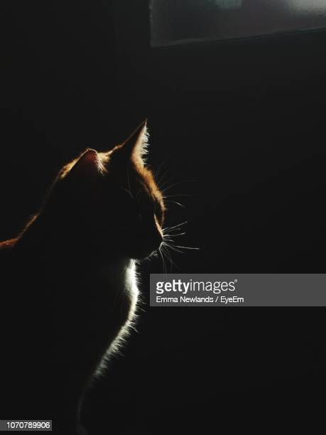 close-up of cat - animal whisker stock pictures, royalty-free photos & images