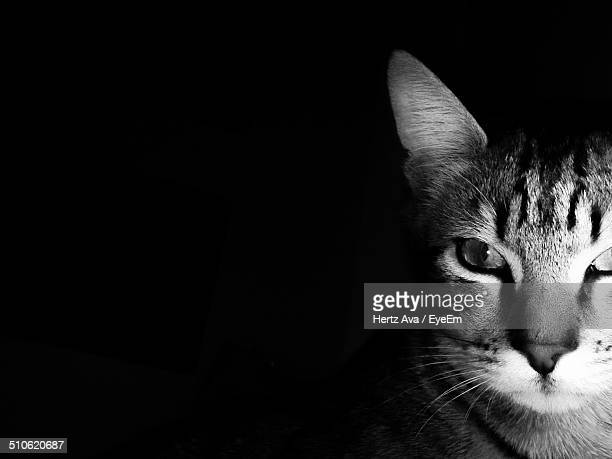 close-up of cat - hertz stock pictures, royalty-free photos & images