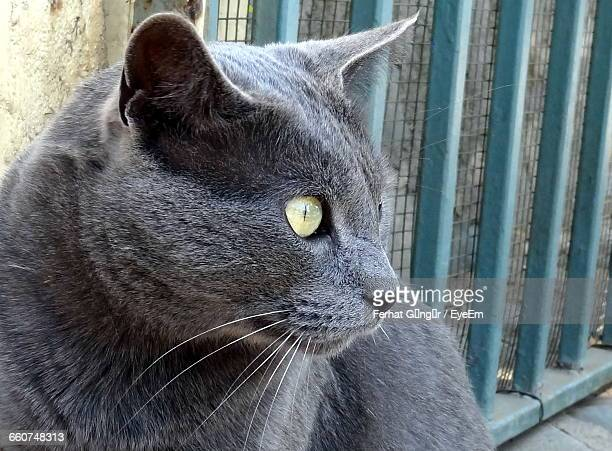 close-up of cat - animal ear stock photos and pictures