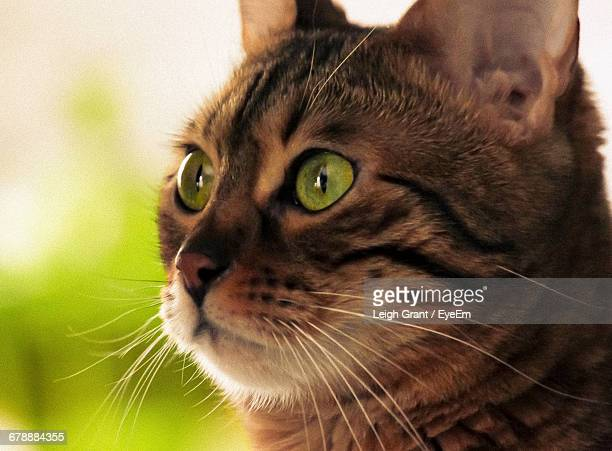 close-up of cat - leigh grant stock pictures, royalty-free photos & images