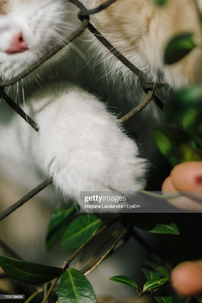 Close-Up Of Cat : Stock Photo