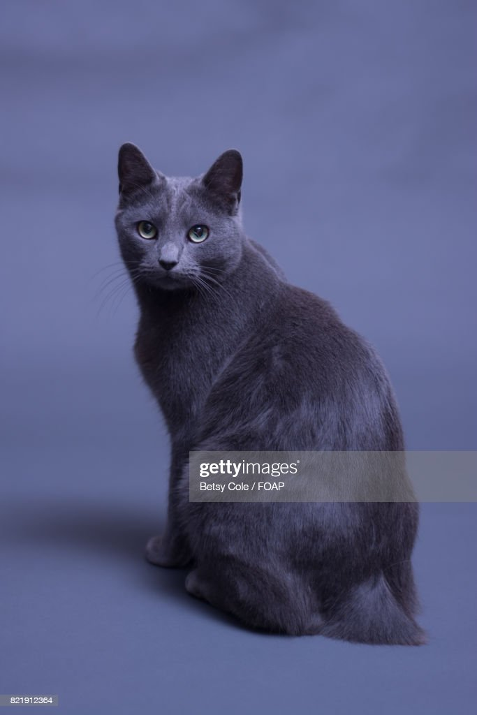 Close-up of cat : Stock Photo