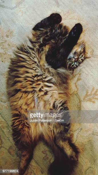 close-up of cat - kitty patterson stock pictures, royalty-free photos & images
