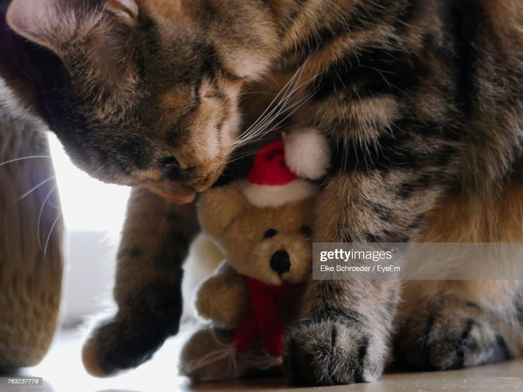 Closeup Of Cat Playing With Teddy Bear Stock Photo Getty Images