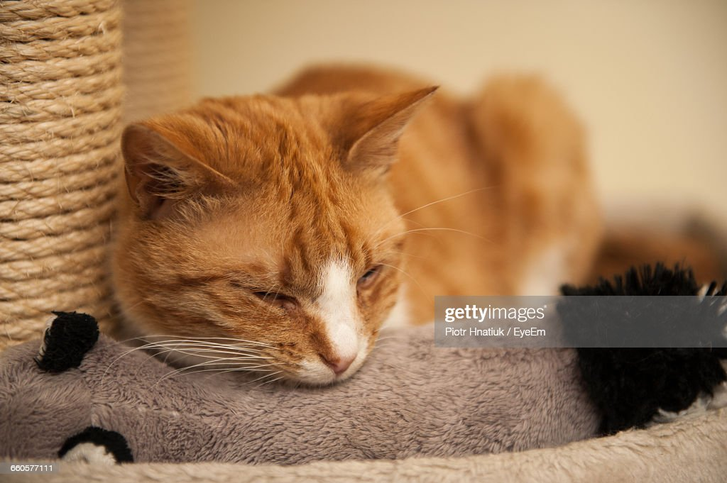 Close-Up Of Cat Relaxing At Home : Stock Photo