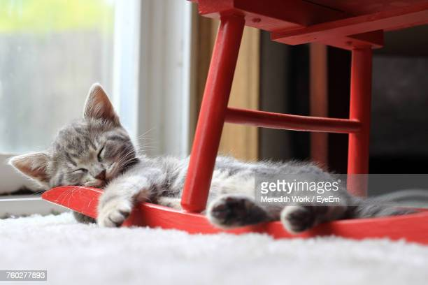 close-up of cat relaxing at home - rocking chair stock pictures, royalty-free photos & images