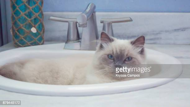 Close-Up Of Cat Relaxing In Sink At Home