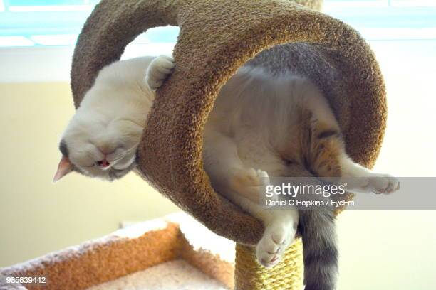 close-up of cat relaxing on tower - tower stock pictures, royalty-free photos & images