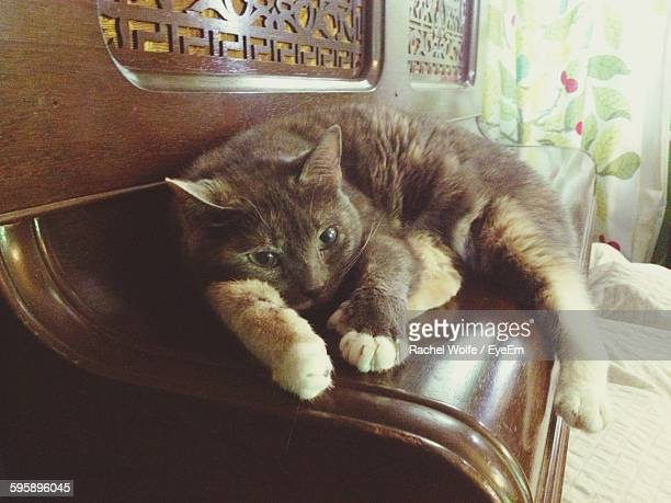 close-up of cat resting on furniture - rachel wolfe stock pictures, royalty-free photos & images