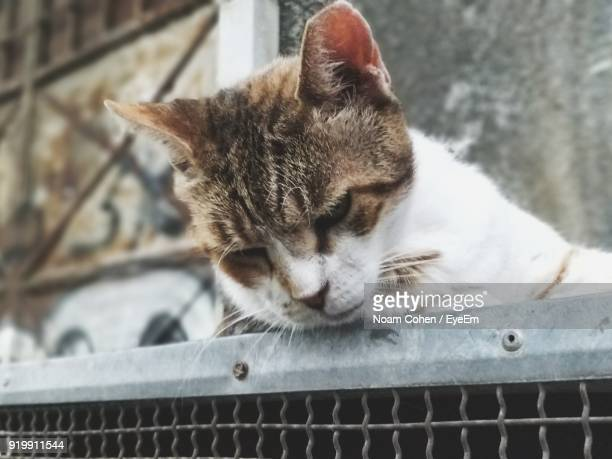 Close-Up Of Cat Resting On Metal Grate