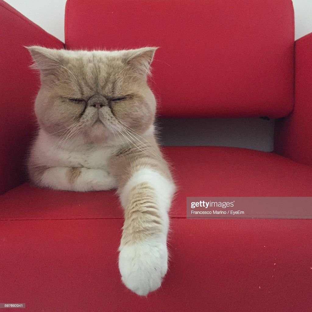 Close-Up Of Cat Resting On Red Chair : ストックフォト