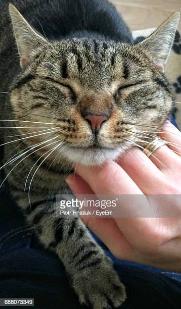 close-up of cat resting - piotr hnatiuk stock pictures, royalty-free photos & images
