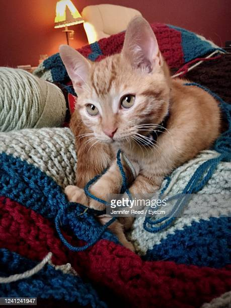 close-up of cat sitting at home - jennifer reed stock pictures, royalty-free photos & images