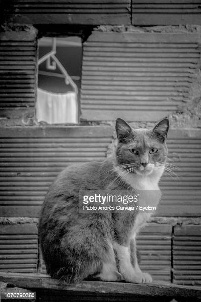 close-up of cat sitting in house - carvajal stock photos and pictures