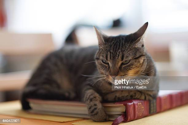 close-up of cat sitting on book - piotr hnatiuk foto e immagini stock