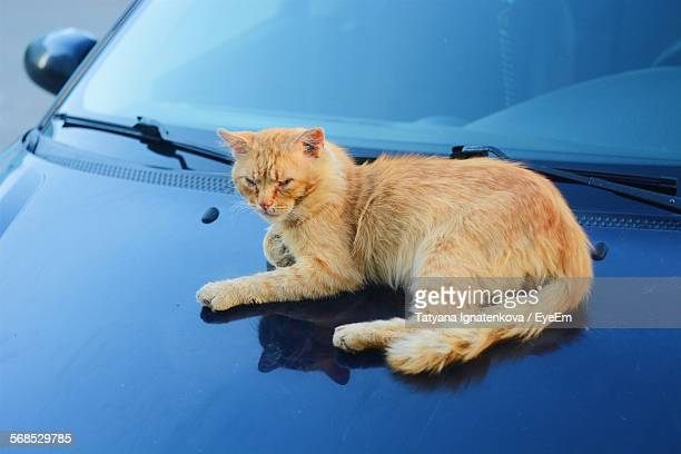 Close-Up Of Cat Sitting On Car