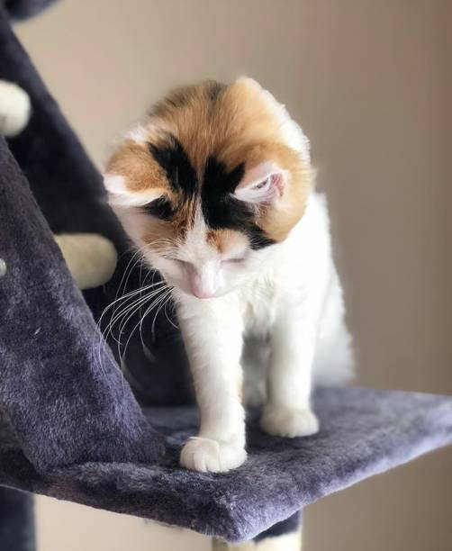Close-up of cat sitting on chair