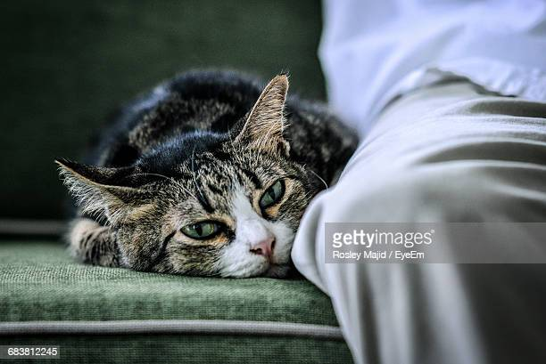 Close-Up Of Cat Sitting On Couch Next To Human