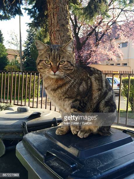Close-Up Of Cat Sitting On Garbage Can