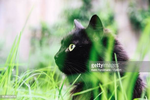 Close-Up Of Cat Sitting On Grassy Field