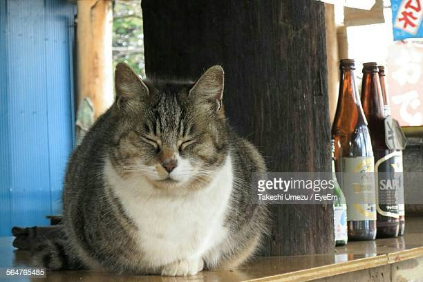 Close-Up Of Cat Sitting On Rack