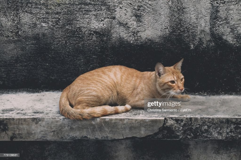 Close-Up Of Cat Sitting On Retaining Wall : Photo