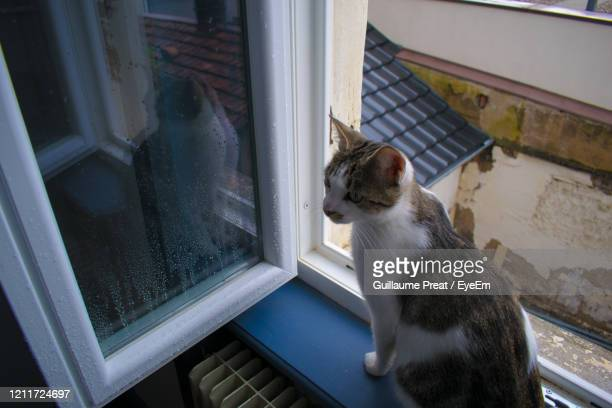 close-up of cat sitting on window sill - mulhouse stock pictures, royalty-free photos & images